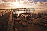 Lake Clifton Thrombolites